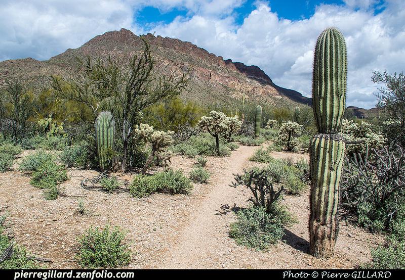 Pierre GILLARD: Tucson Mountain Park &emdash; 2019-528623