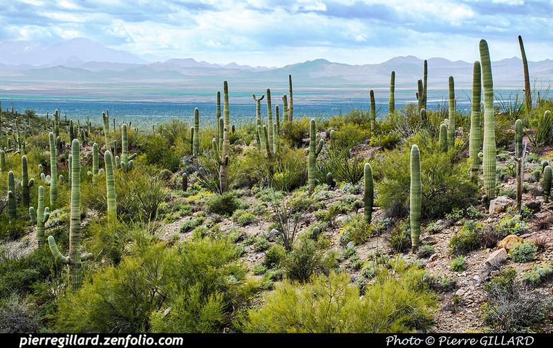 Pierre GILLARD: Tucson Mountain Park &emdash; 2019-528649