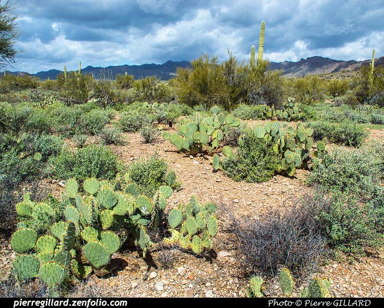 Pierre GILLARD: Tucson Mountain Park &emdash; 2019-528644