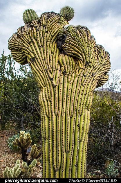 Pierre GILLARD: Tucson Mountain Park &emdash; 2019-528668