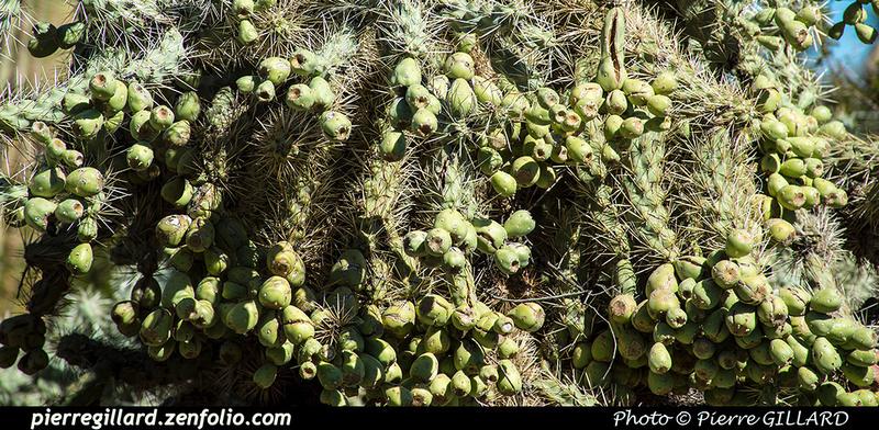 Pierre GILLARD: Phoenix - Desert Botanical Garden &emdash; 2019-529537