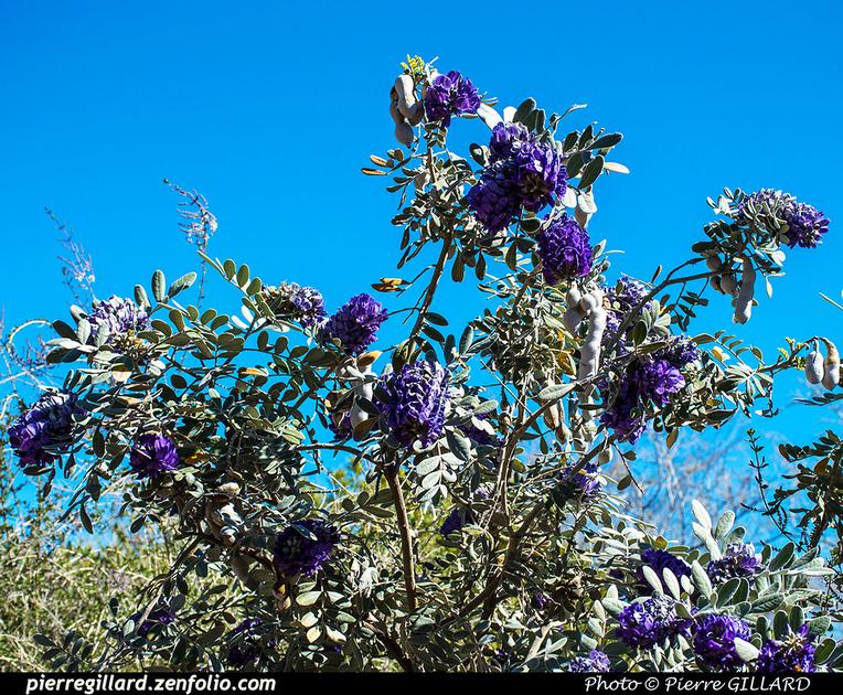 Pierre GILLARD: Phoenix - Desert Botanical Garden &emdash; 2019-529545