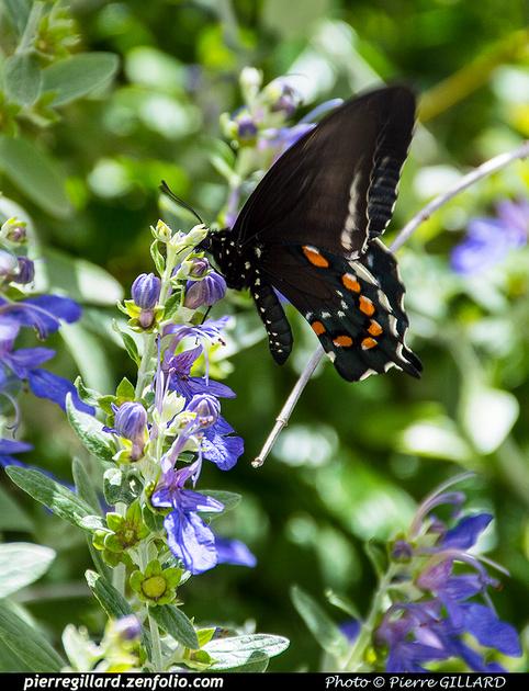 Pierre GILLARD: Phoenix - Desert Botanical Garden &emdash; 2019-529553