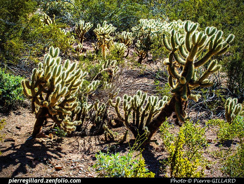 Pierre GILLARD: Phoenix - Desert Botanical Garden &emdash; 2019-529543