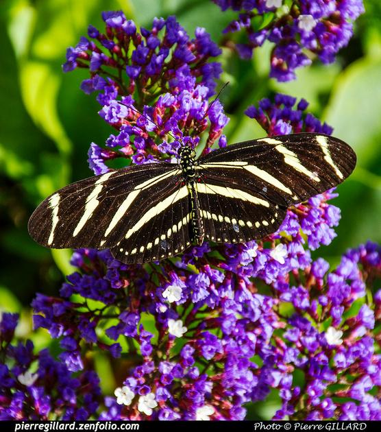Pierre GILLARD: Phoenix - Desert Botanical Garden &emdash; 2019-529559