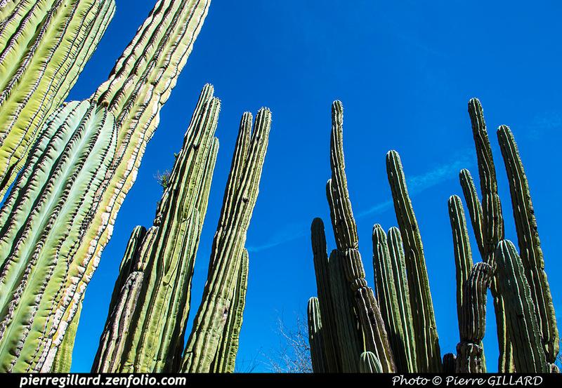 Pierre GILLARD: Phoenix - Desert Botanical Garden &emdash; 2019-529592