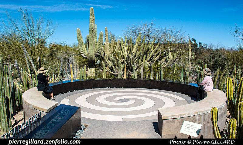 Pierre GILLARD: Phoenix - Desert Botanical Garden &emdash; 2019-529595