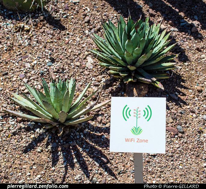 Pierre GILLARD: Phoenix - Desert Botanical Garden &emdash; 2019-529601