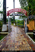 Distillerie Appleton Estate