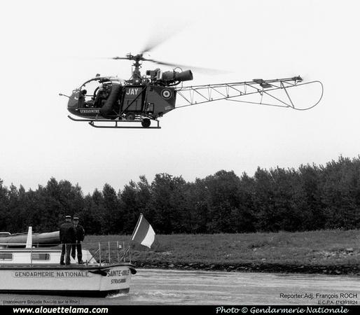 Pierre GILLARD: Alouettes & Lama &emdash; 005834